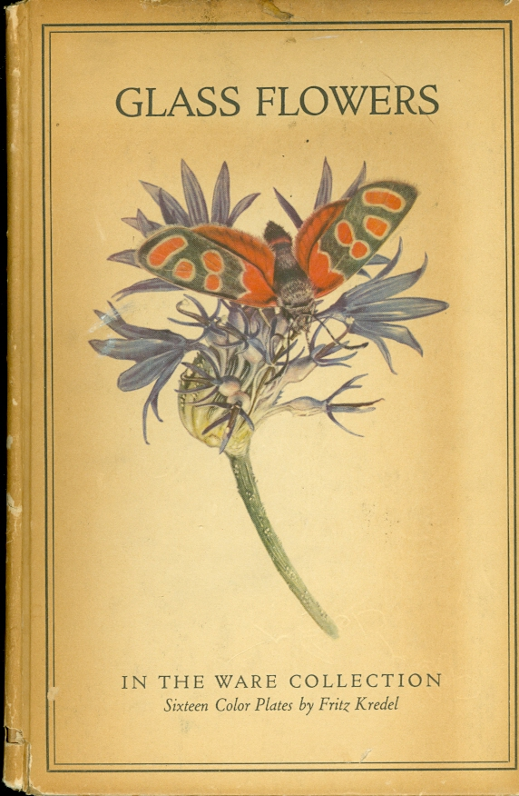 Image for Glass Flowers From the Ware Collection in the Botanical Museum of Harvard University