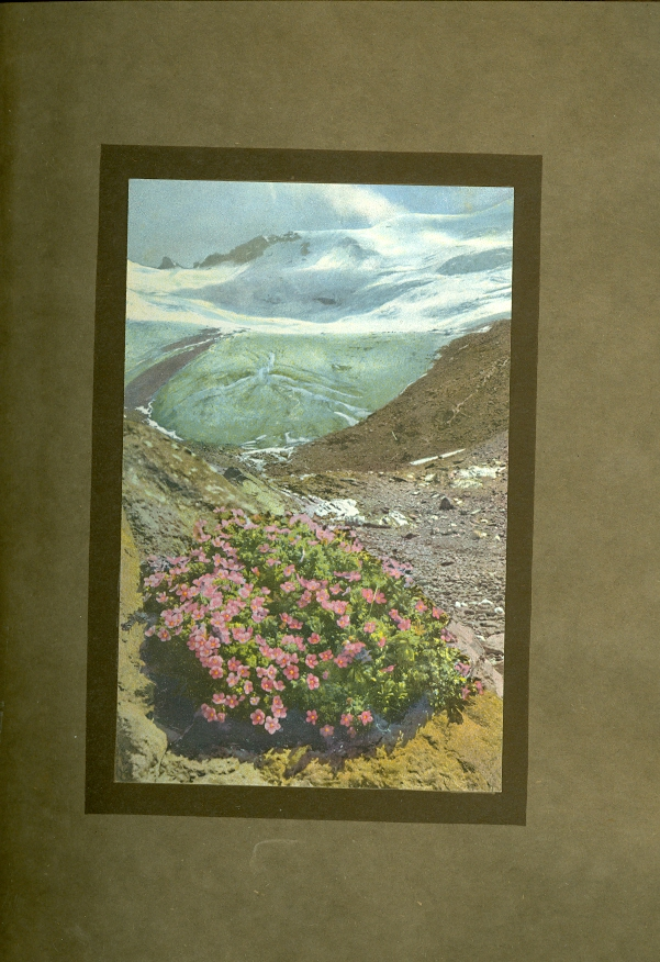 Image for Alpine Flowers and Rock Gardens